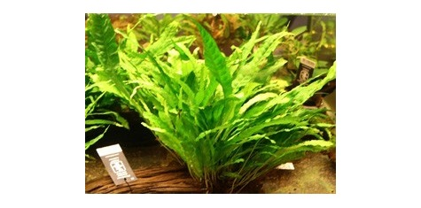 plantes sur racine aquaservice