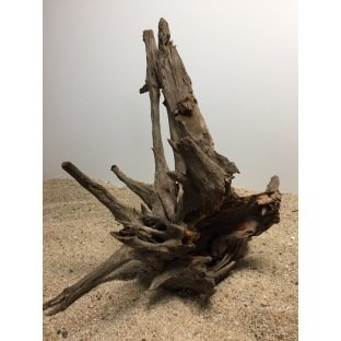 Racine naturelle et branchue Corbo Root
