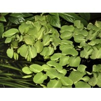 Plantes de surface