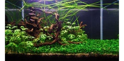 sp cialiste en clairage led pour aquarium d 39 eau douce. Black Bedroom Furniture Sets. Home Design Ideas