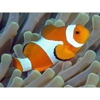 Nourriture pour poissons d'eau de mer