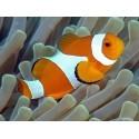 Aliment pour poissons d'eau de mer