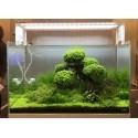 Bonsai & objets de déco Zen